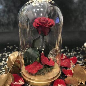 Bella Mini Red (Christmas edition)