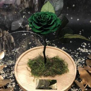 Bella Green (Christmas edition)